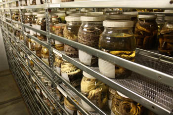 jars of specimens