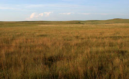 Mixed grass prairie at Sorum Dam GPA, Perkins Co SD