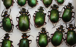 Entomology photo