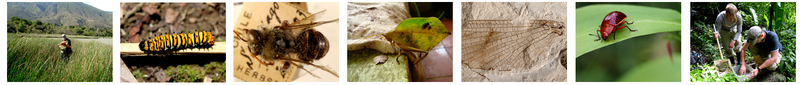 Entomology Header photos