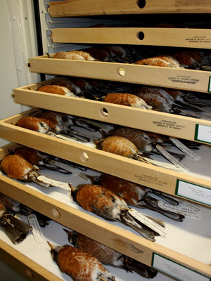 Shelves of birds