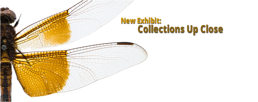 Collections Exhibit graphic