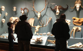 Skull exhibit visitors