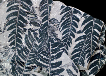 Image result for paleobotany