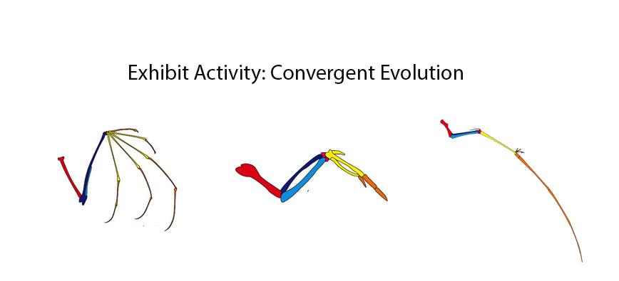Exhibit Activity: Convergent Evolution