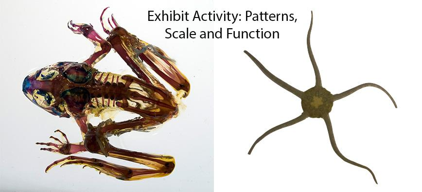 Exhibit Activity: Patterns, Scale and Function