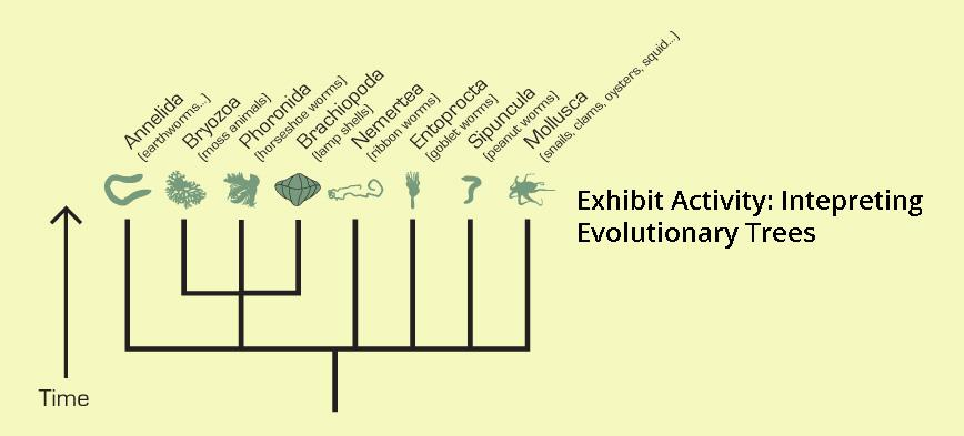 Exhibit activity invertebrate tree graphic