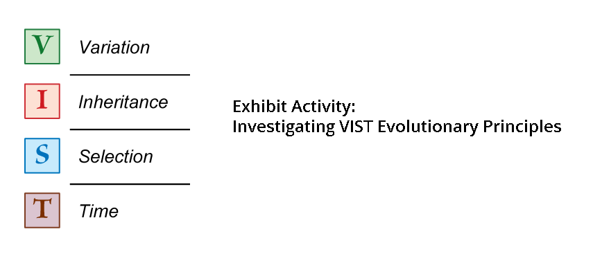 Exhibit activity VIST (variation, inheritance, selection and time) graphic