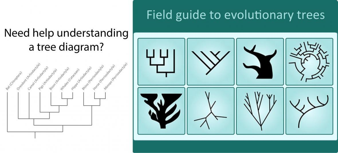 Need help understanding a tree diagram?