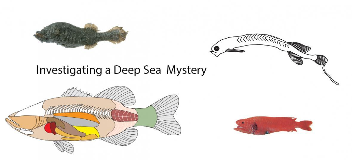 Investigating a Deep Sea Mystery
